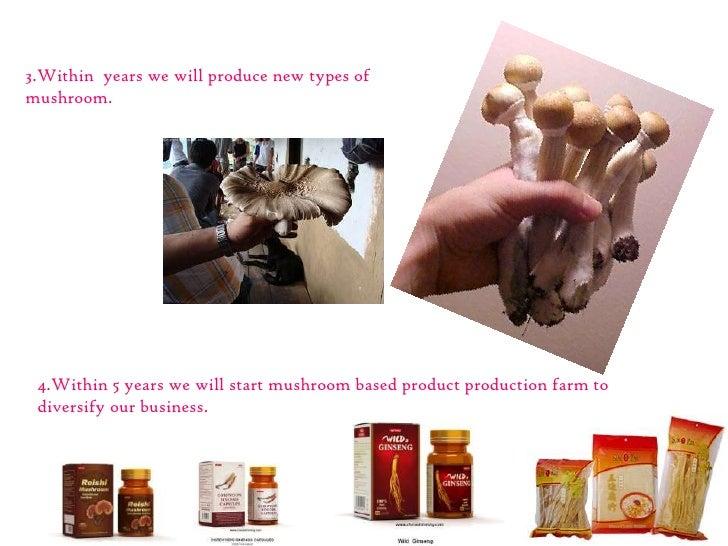 A Sample Mushroom Farming Business Plan Template