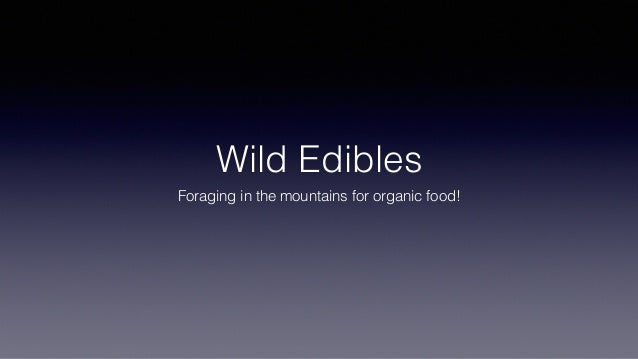 Wild Edibles Foraging in the mountains for organic food!