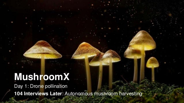 MushroomX Day 1: Drone pollination 104 Interviews Later: Autonomous mushroom harvesting