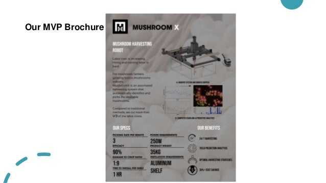 Our MVP Brochure