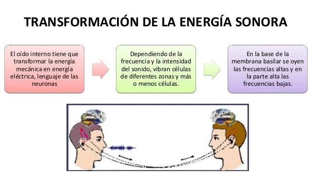 Musica Anatomía y fisiología de la audición por myriam cordova