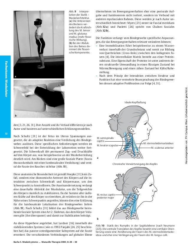 Muskelsysteme teil 2