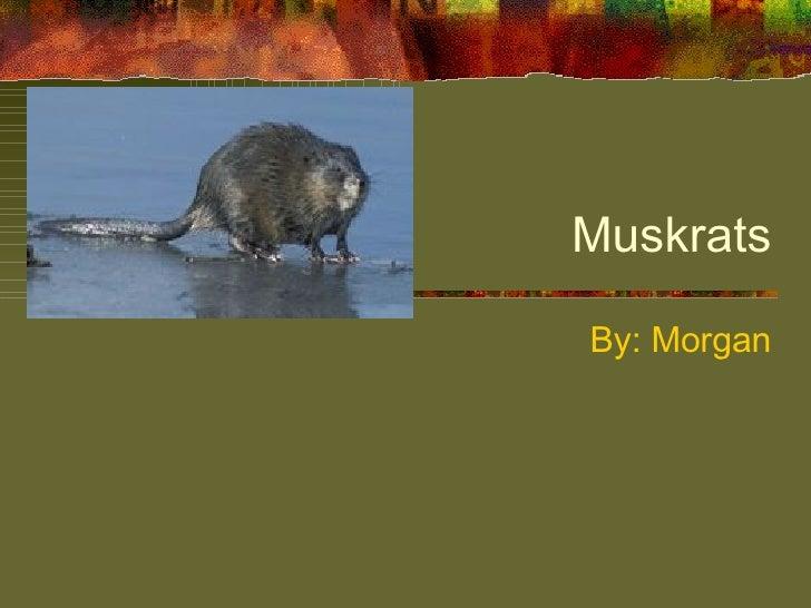 Muskrats By: Morgan