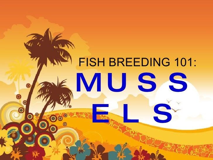 FISH BREEDING 101: MUSSELS