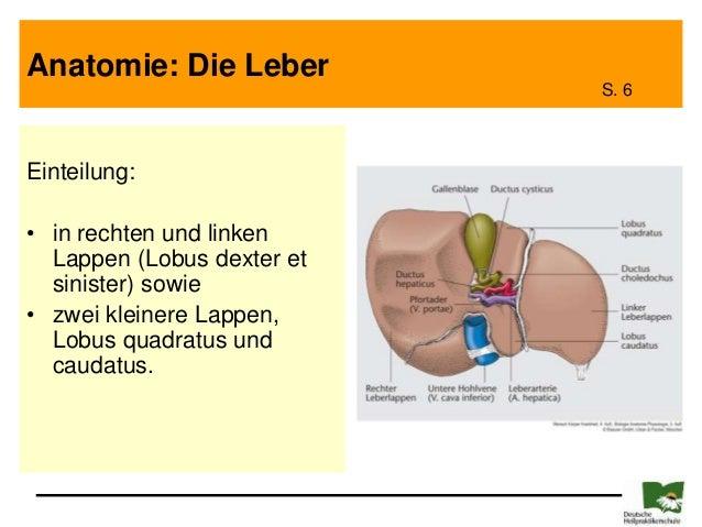 Musterpräsentation Leber - Galle - Pankreas 2011