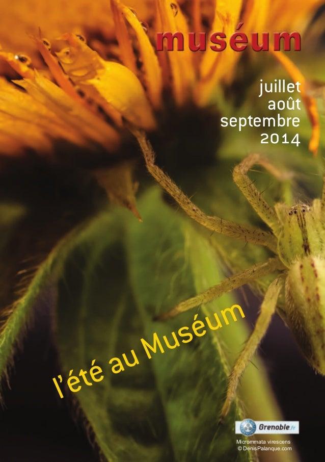 juillet août septembre 2014 l'été au Muséum Micrommata virescens © DenisPalanque.com