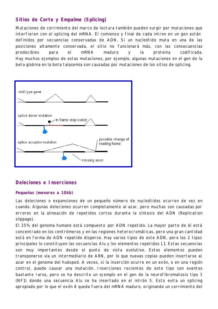 Sitios de Corte y Empalme (Splicing)Mutaciones de corrimiento del marco de lectura también pueden surgir por mutaciones qu...