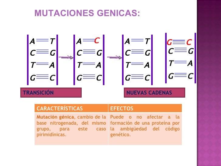 Mutaciones-biologia comun Slide 3