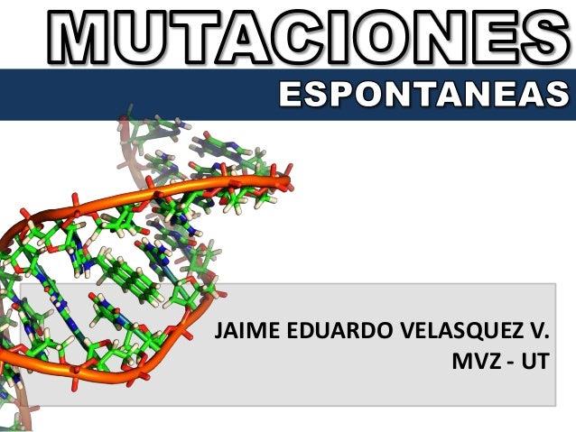 JAIME EDUARDO VELASQUEZ V. MVZ - UT