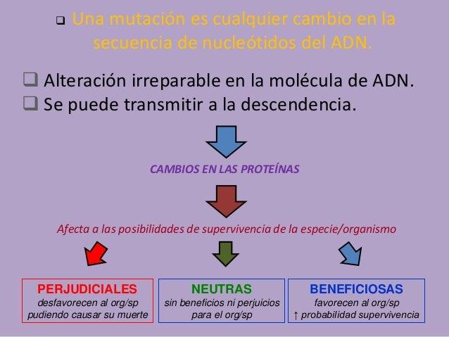Mutacion y adn Slide 2