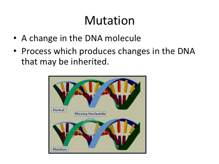 Mutation• A change in the DNA molecule• Process which produces changes in the DNA  that may be inherited.
