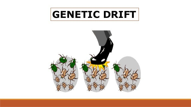 mutation genetic drift
