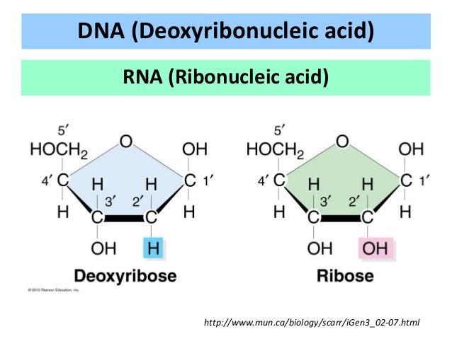 Mutation and DNA repair Slide 3