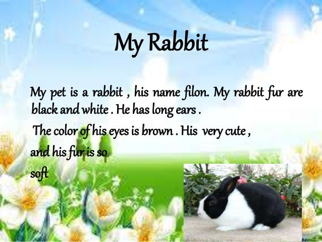 My Rabbit My pet is a rabbit , his name filon. My rabbit fur are black and white . He has long ears . The color of his eye...