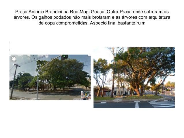Praça Antonio Brandini na Rua Mogi Guaçu. Outra Praça onde sofreram as árvores. Os galhos podados não mais brotaram e as á...