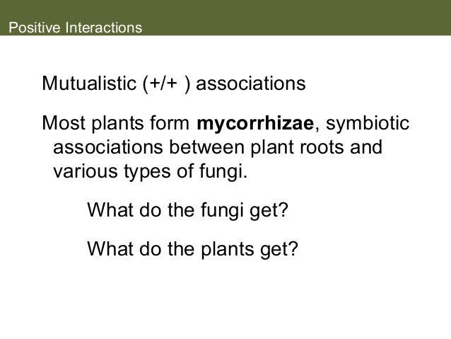 mycorrhizae and plant roots commensalism relationship