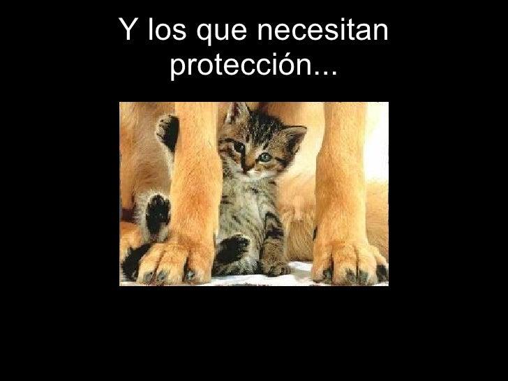Y los que necesitan protección...