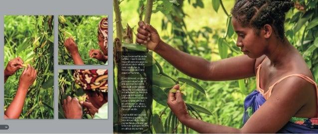 L'insecte censé féconder la fleur n'ayant pas été importé dans les pays où la culture de la vanille s'est répandue, la féc...