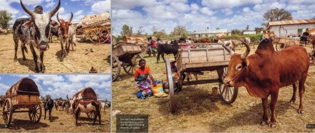 Les marchés populaires en pays Mahafaly sont une occasion d'échange entre les villageois. 8180