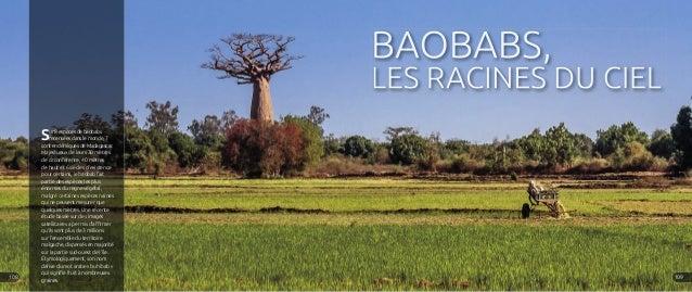 BAOBABS, LES RACINES DU CIEL Sur 8 espèces de baobabs recensées dans le monde, 7 sont endémiques de Madagascar. Majestueux...