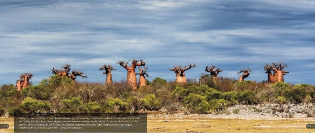 Presque toutes les parties du baobab sont utilisées, ce qui lui vaut la protection et la vénération des populations locale...
