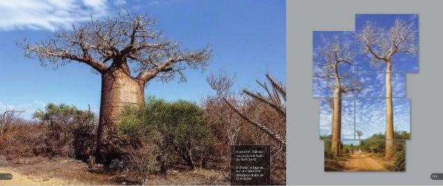 A gauche : Adanso- nia Za dans le bush du Sud-Ouest. A droite : villageois sur une piste bor- dée de baobabs de Grandidier...