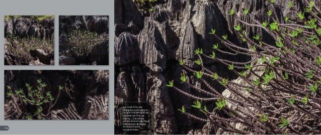 Sur ce sol riche, une végétation particulière va pouvoir s'installer avec ses baobabs, ses ficus, ses Adenia…. Entre le so...