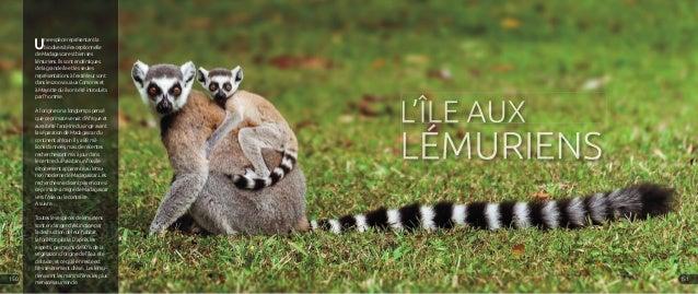 Une espèce représentant la biodiversité exceptionnelle de Madagascar est bien ses lémuriens. Ils sont endémiques de la gra...