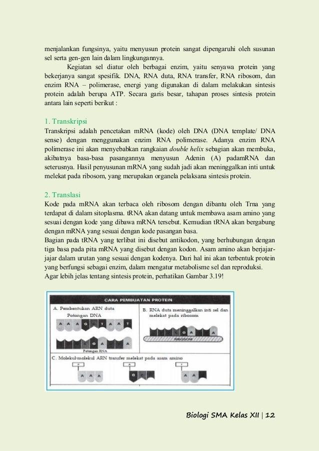 Gen dna dan kromosom sintesis protein 12 ccuart Image collections