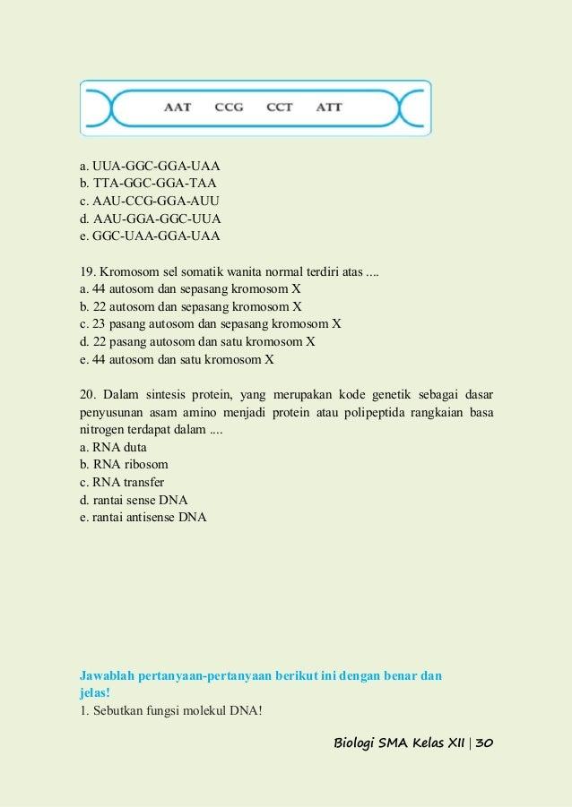 Gen dna dan kromosom 30 ccuart Image collections