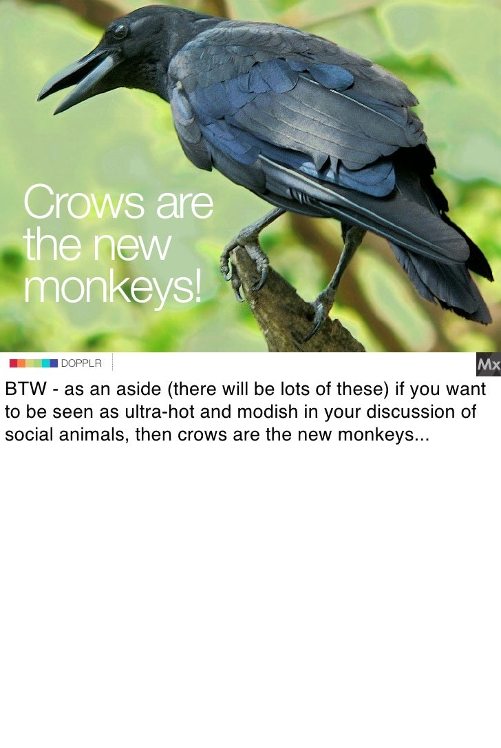 Crows are   the new   monkeys!DOPPLR                    DOPPLR           DOPPLR  BTW - as an aside (there will be lots of ...