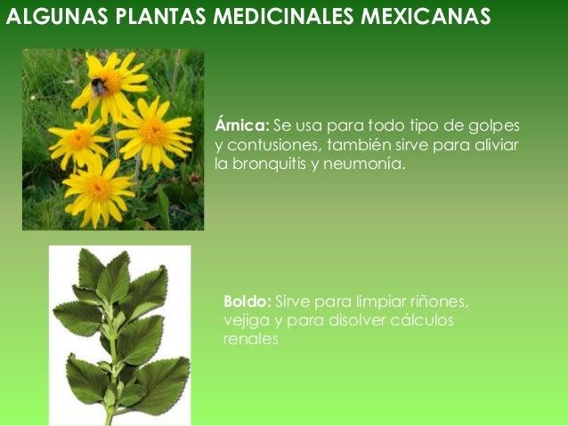 M xico prehispanico herbolaria for Manzanilla planta medicinal para que sirve