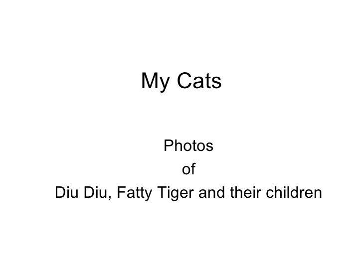 My Cats Photos of Diu Diu, Fatty Tiger and their children