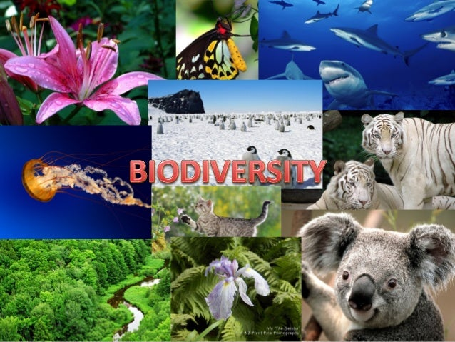 CONTENTS 1. Introduction 2. Concept of Biodiversity and its types 3. Distribution of Biodiversity 4. Biodiversity and bala...