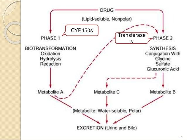 13 CYP450s Transferase s