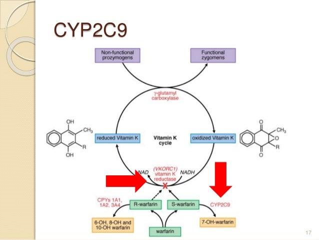 CYP2C9 17