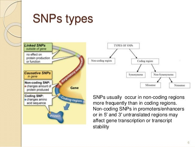 SNPs types 6 SNPs usually occur in non-coding regions more frequently than in coding regions. Non-coding SNPs in promoters...