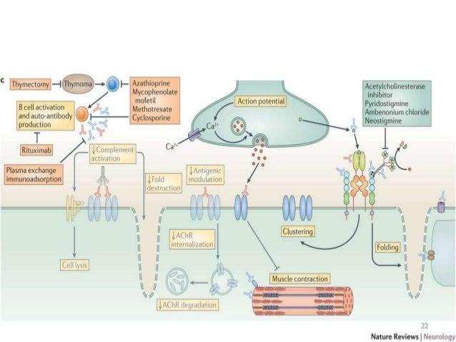 Mestinon Medication Myasthenia Gravis