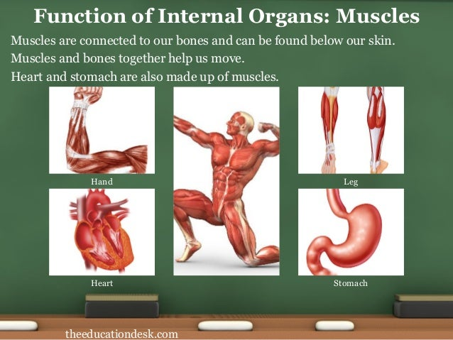 Environmental science evs body parts class ii function of internal organs joints 7 ccuart Gallery