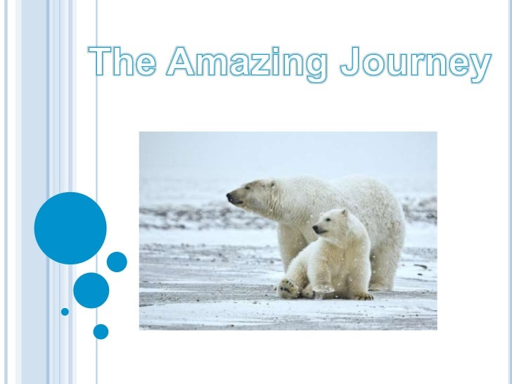 The Amazing Journey<br />