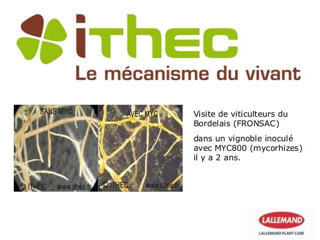Visite de viticulteurs duBordelais (FRONSAC)dans un vignoble inoculéavec MYC800 (mycorhizes)il y a 2 ans.