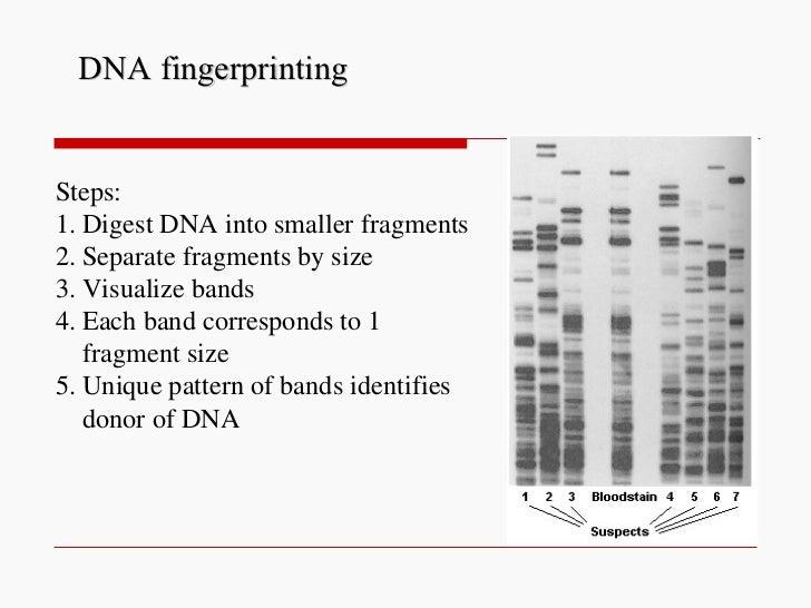 DNA fingerprinting Steps: 1. Digest DNA into smaller fragments 2. Separate fragments by size 3. Visualize bands 4. Each ba...