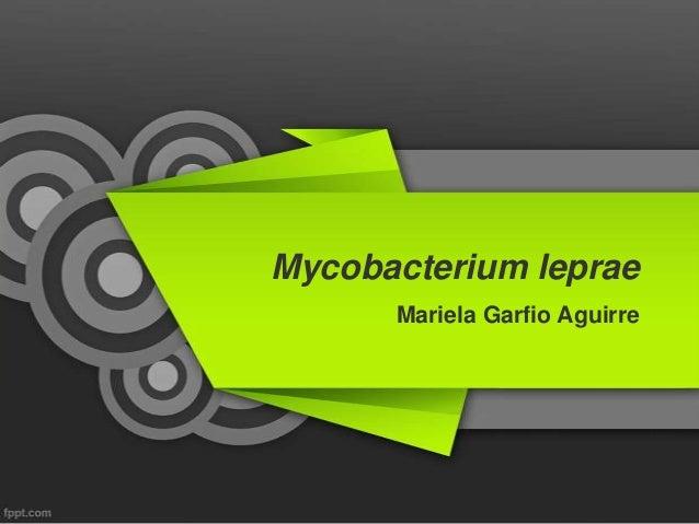 Mycobacterium leprae  Wikipedia