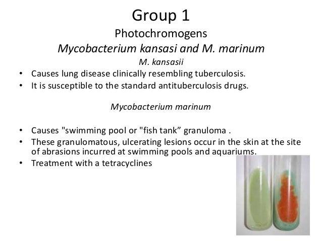 Mycobacterium Tuberculosis And Atypical Mycobacteria