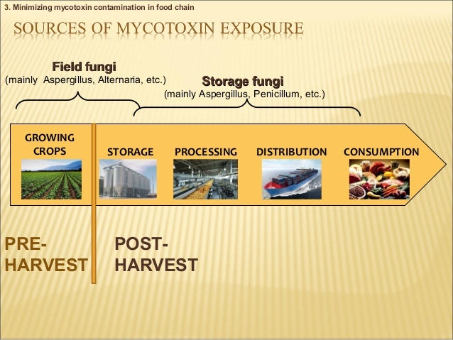 Increasing Awareness of, and Concerted Action for, Minimizing Mycotoxin Exposure Worldwide