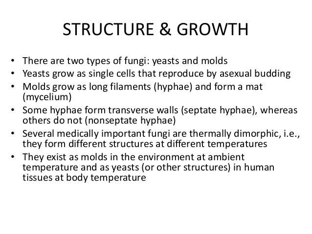 introduction to mycology Slide1 introduction to fungi (mycology) slide2 main characteristics of fungi  eukaryotic cells non-photosynthetic (heterotrophic) most fungi are  multicellular.