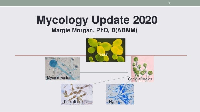Mycology Update 2020 Margie Morgan, PhD, D(ABMM) Mycormycetes Conidial Molds Dematiacious Hyaline Yeast 1