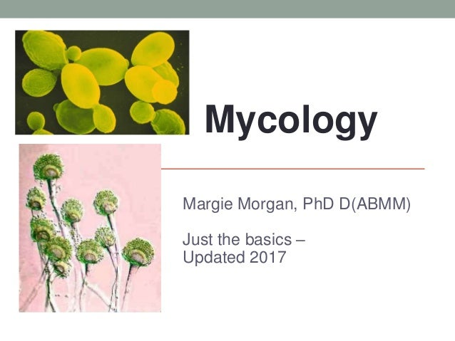 MYCOLOGY Margie Morgan, PhD D(ABMM) Just the basics – Updated 2017 Mycology