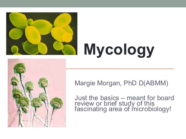 MYCOLOGY Margie Morgan, PhD D(ABMM) Just the basics – meant for board review or brief study of this fascinating area of mi...