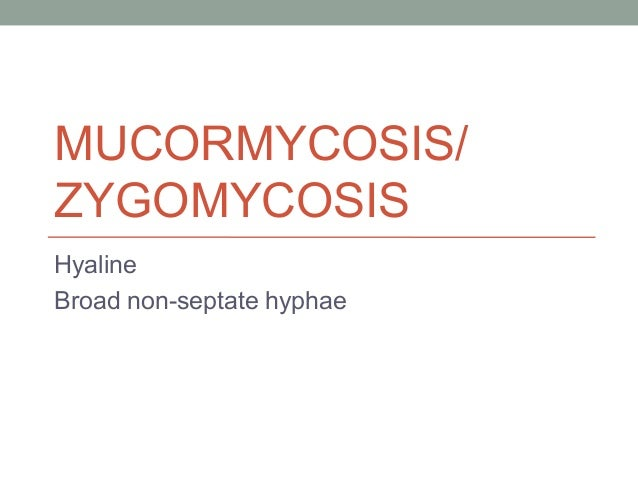 MUCORMYCOSIS/ ZYGOMYCOSIS Hyaline Broad non-septate hyphae